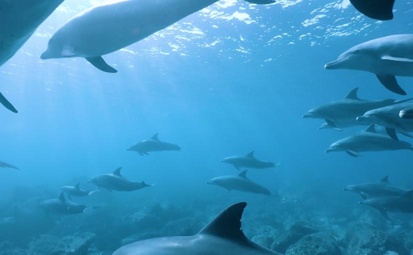 東京でイルカと泳ぐ!御蔵島のドルフィンスイムを徹底解説!