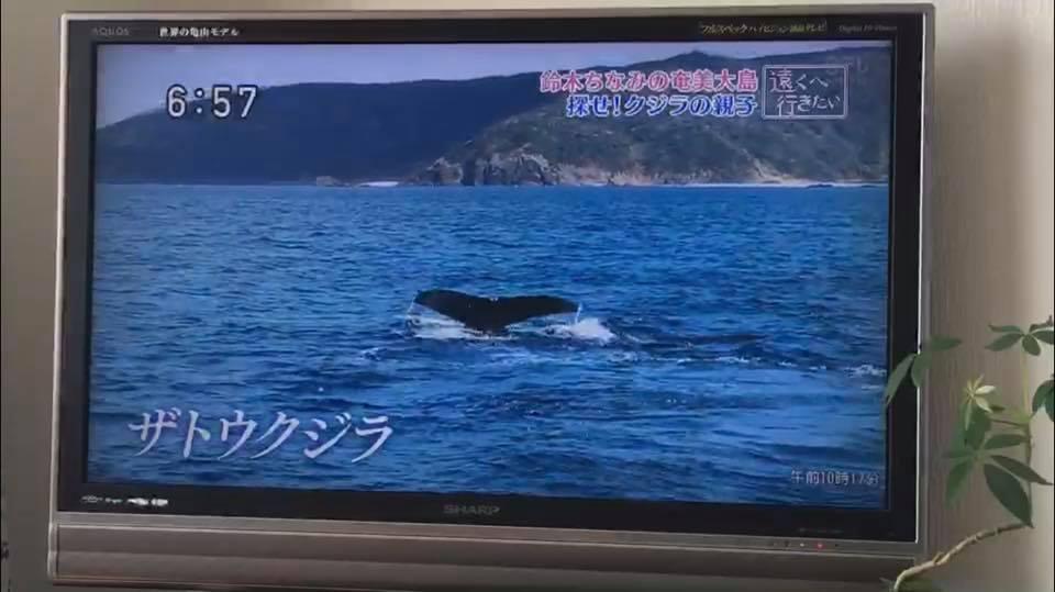 クジラ・水面・遠くへ行きたい