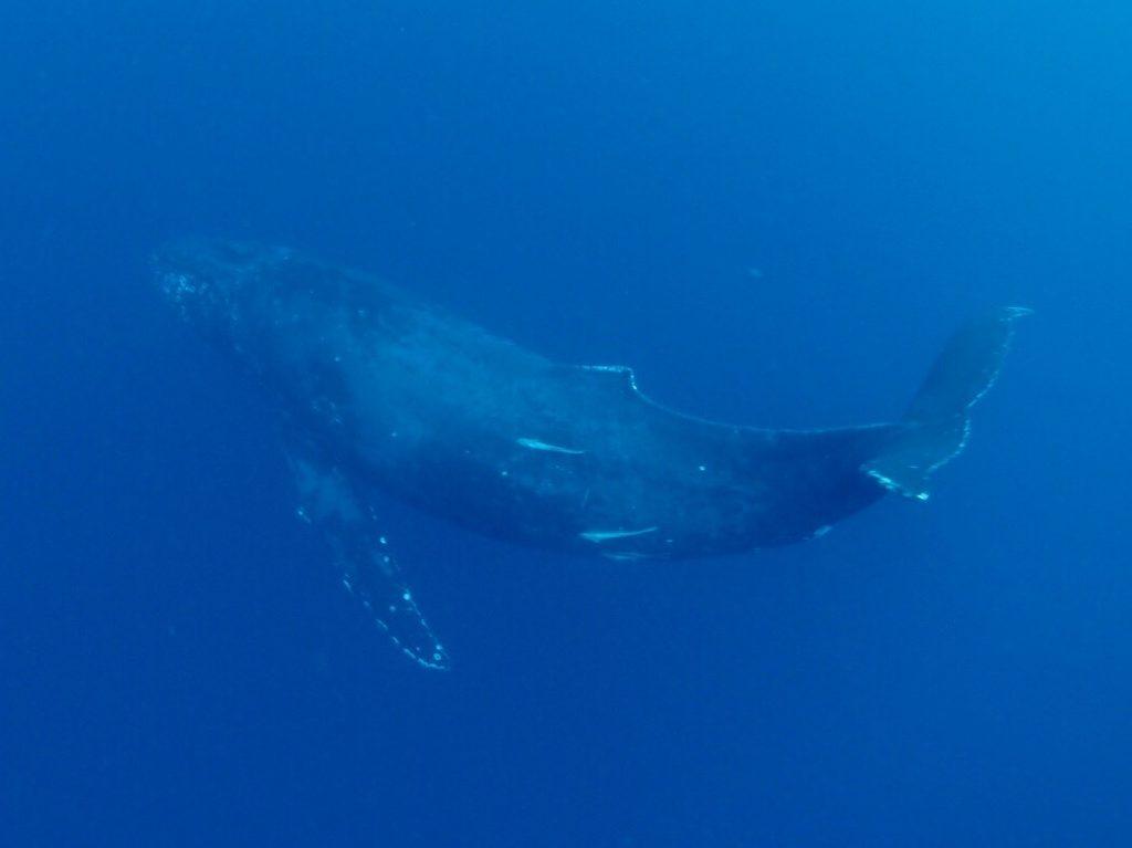 奄美1日目クジラ
