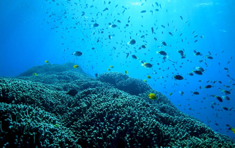 沖縄本島のダイビングポイントを動画付きで紹介(青の洞窟など)