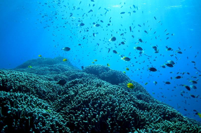 なかゆくいの枝珊瑚