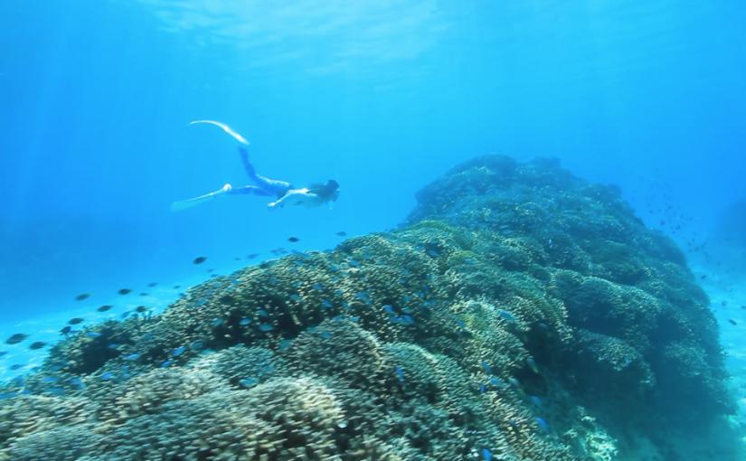 ナカユクイで素潜り!サンゴが復活していた!(沖縄県恩納村)