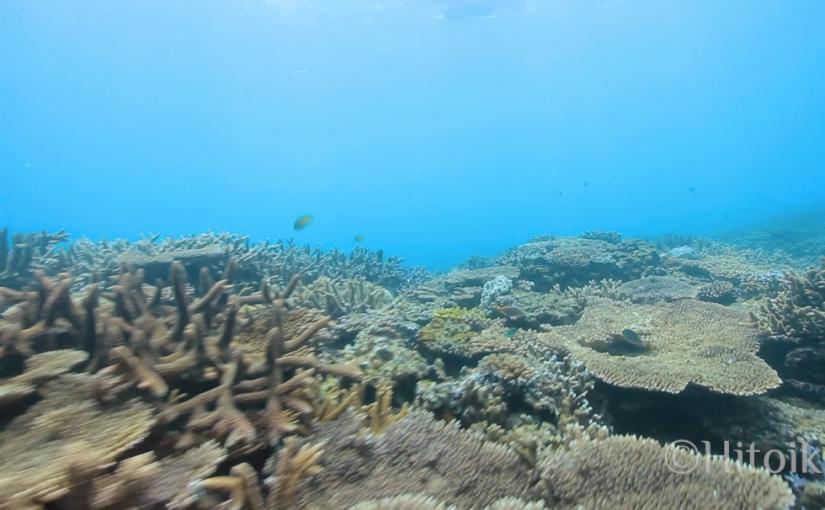 やんばるの海で素潜り。(沖縄県国頭村)