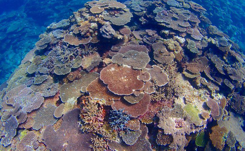 今帰仁村の崎山ビーチで素潜り!サンゴの丘が魅力的!