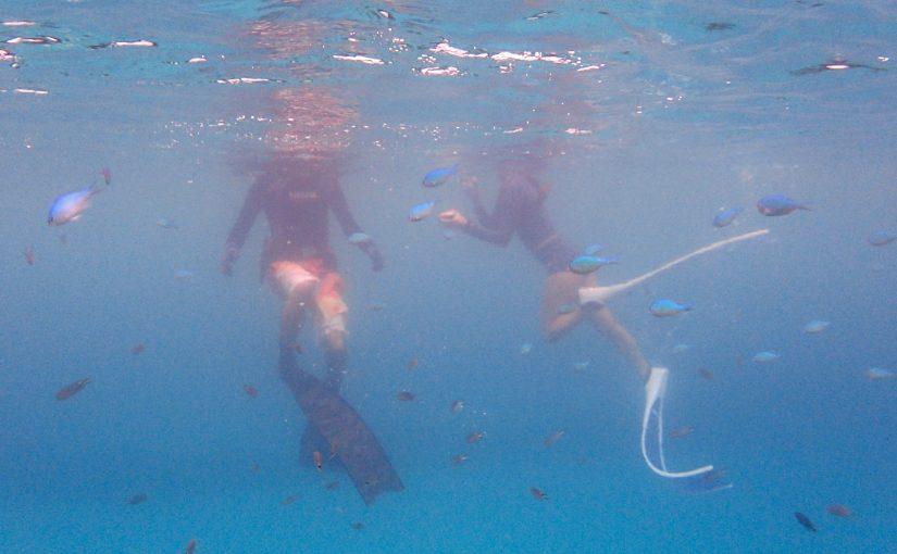 沖縄本島の「なかゆくい」でウミガメ&トビエイと素潜り