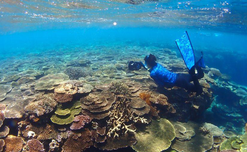 国頭村の与那トンネルで素潜り!離島並のサンゴ礁に感動!