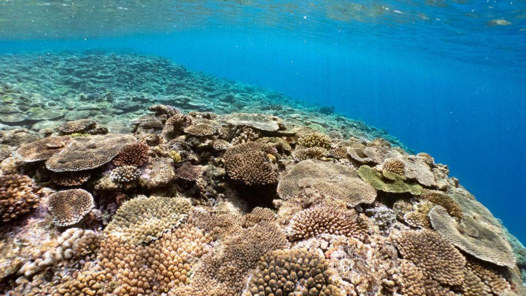 瀬底島西サンゴ