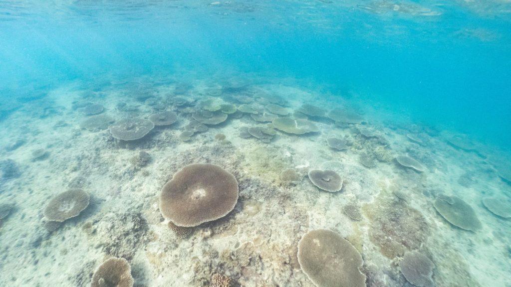 瀬底島東テーブルサンゴ